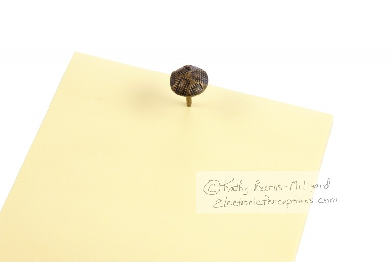 Stock Photo: Yellow Notes - by Kathy Burns-Millyard