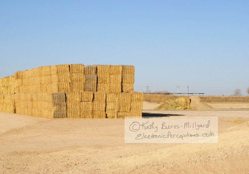 Stock Photo: Bales of Hay - by Kathy Burns-Millyard