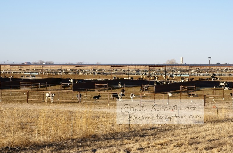 weeds Stock Photo: Cattle Stockyard