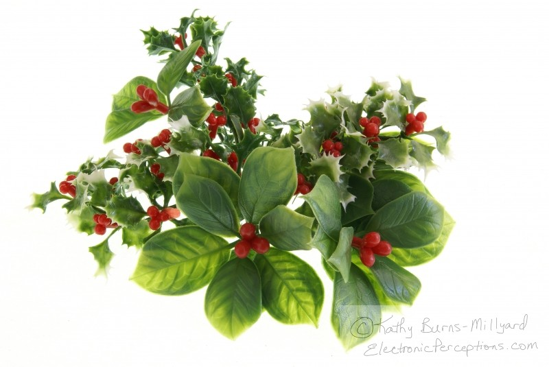 berries Stock Photo: Holiday Greenery