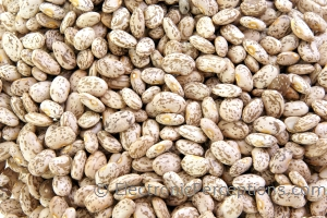 basics Stock Photo: Beans Background