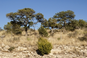 rocks Stock Photo: Desert Trees and Shrubs
