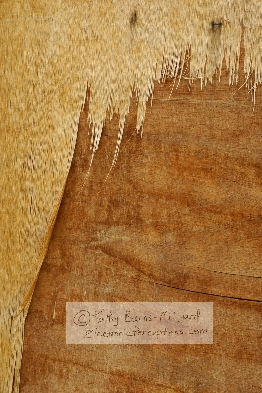 Stock Photo: Peeling Wood - by Kathy Burns-Millyard
