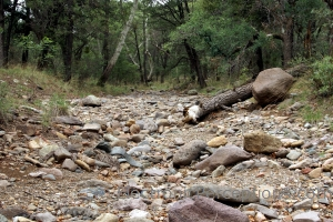 Nature Stock Photo: Dry Stream Bed
