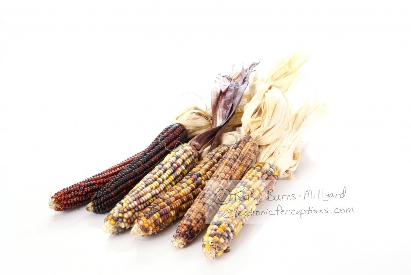 Stock Photo: Indian Corn - by Kathy Burns-Millyard