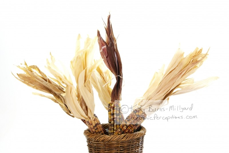 autumn Stock Photo: Indian Corn