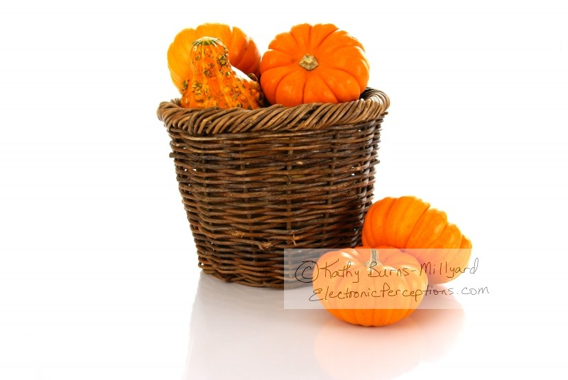 Stock Photo: Pumpkins in a Basket - by Kathy Burns-Millyard