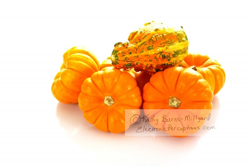 Stock Photo: Pumpkins and Gourd - by Kathy Burns-Millyard