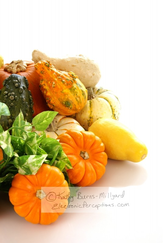 autumn Stock Photo: Autumn Harvest