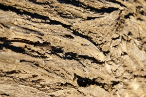 Royalty Free Image: Bark Texture