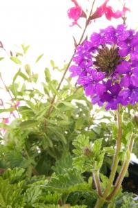 Royalty Free Image: Spring Gardening
