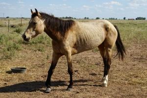 Royalty Free Image: Horse