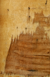 Stock Photo Thumbnail: Peeling Wood