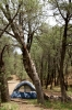 Royalty Free Image: Forest Camping
