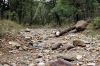Royalty Free Image: Dry Stream Bed
