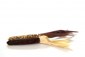 Royalty Free Image: Indian Corn